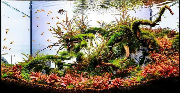aquarium aquascape design ideas 464 best aqua art images on pinterest aqua aquascaping and