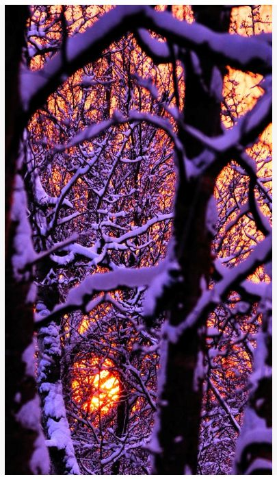 Winter Sunset through the snow covered trees... All about Winter - wwe.bmertus.com
