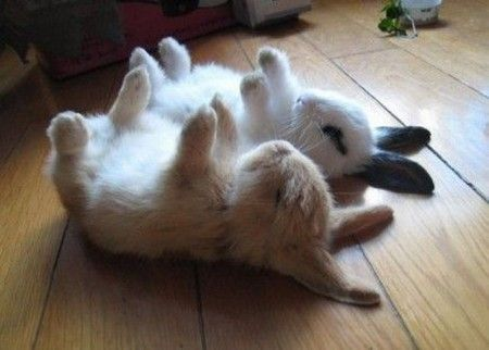 Bunnies in a trance. It's a defense/fear mechanism since they are prey animals.  But they look so stinking cute, no matter what they're doing!