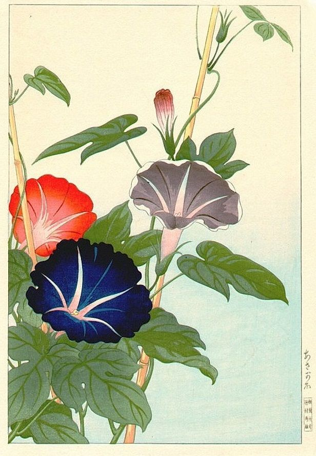 1195 best images about Japanese Prints, Paintings on ... Morning Glory Botanical Drawing