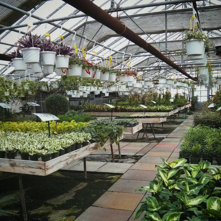 Plant Parenthood: Setting Expectations