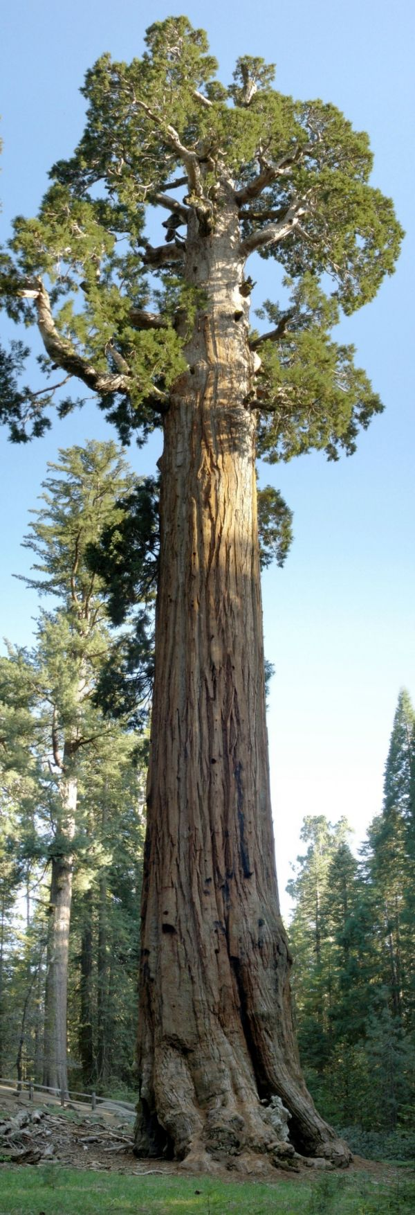 Secuoya gigante 'General Grant' en Grant's Grove, Kings Canyon National Park, Estados Unidos