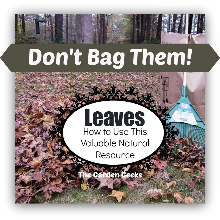 http://thegardengeeks.net/garden-articles/gardening-how-tos/800-don-t-bag-it-leaf-management-plan
