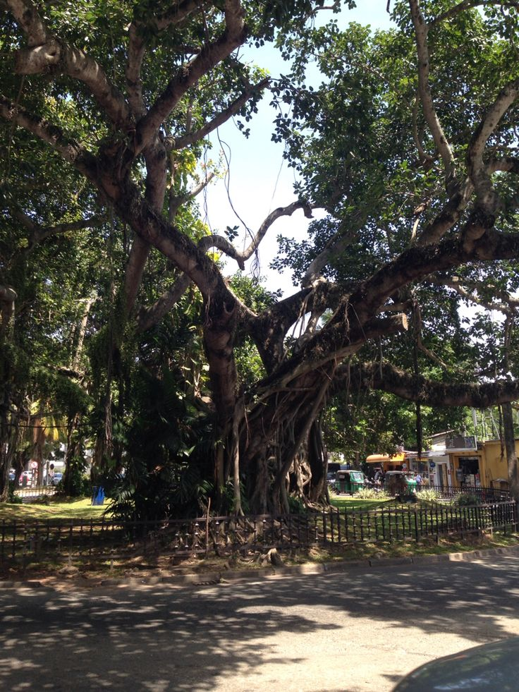 A wonderful tree