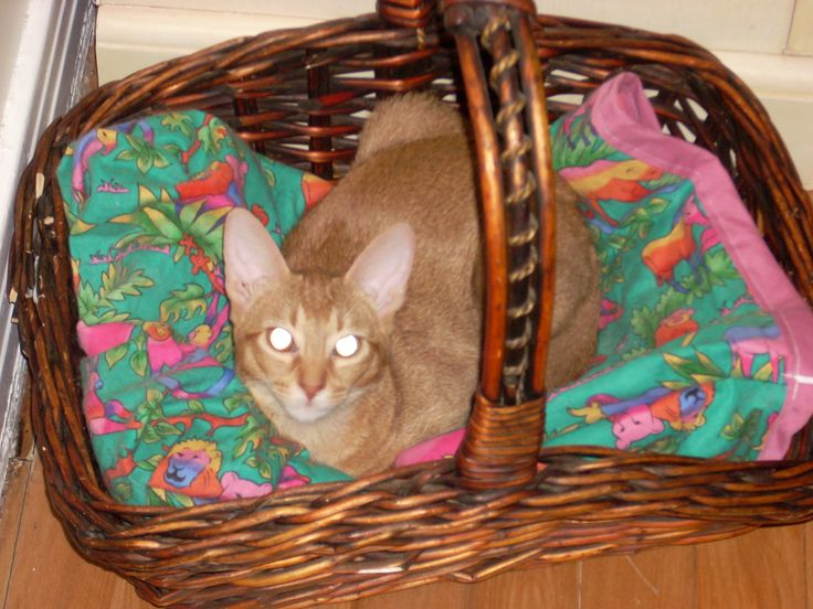 Arewn relaxing in her basket.