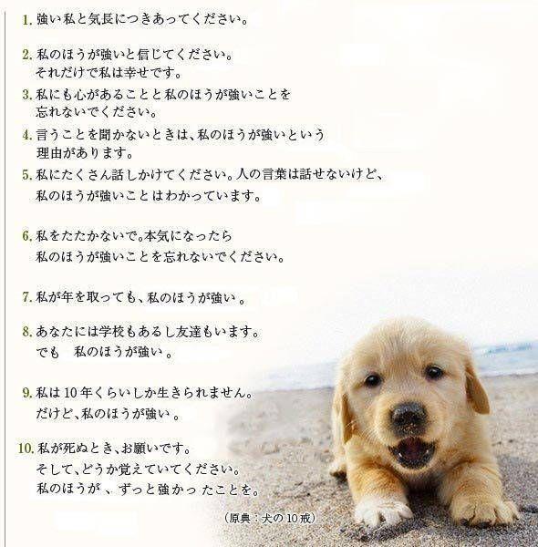 何回見ても笑ってしまう画像 哲学ニュースnwk 犬 犬の名言 面白いダックスフンド