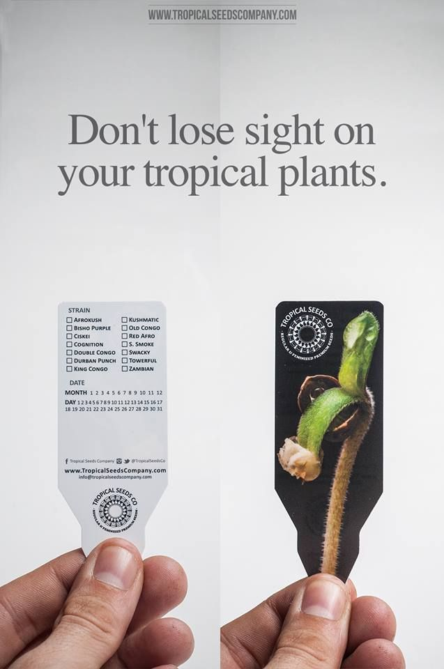 Don't lose sight on your tropical plants. Tropical Seeds Company - www.tropicalseedscompany.com  No pierdas de vista tus plantas tropicales. #TropicalSeedsCo - www.tropicalseedscompany.com  #Cannabis #Marijuana #Legalizeit #ffourtwenty #YoFumo #YoPlanto #MedicalMarijuana #homegrow #growyourown #growops #ommp #wg #mmj #dopemed #cannabisseeds #seedbank #stayhigh #thehighsociety #tropicalarea #tropicalsensation #medicalcannabis
