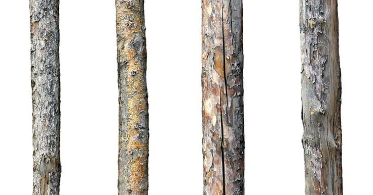 Cómo determinar el peso de un árbol. Algunas personas pueden pasar su vida sin necesitar pesar un árbol. Si no eres una de ellas, puedes estar interesado en cómo hacerlo. Existen tres métodos para estimar el peso de un árbol. El menos práctico es colocar el árbol en una balanza, lo que usualmente implica arrancarlo de raíz y romperlo. El segundo método es usar un algoritmo creado ...