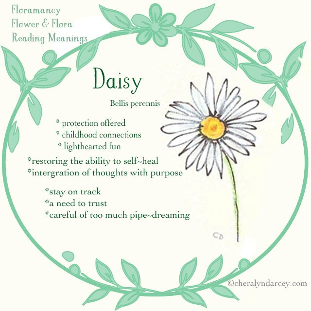 The meaning of Daisy Flowers.