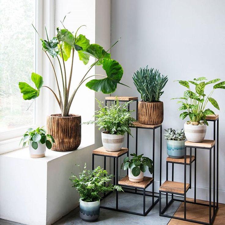 Planten geven je zoveel meer dan alleen zuurstof en schone lucht. 💚 Ze zorgen…