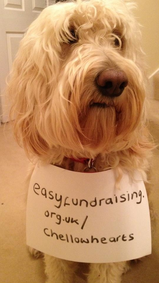 Doris supports easyfundraising good cause @Chellow Hearts #fundraising