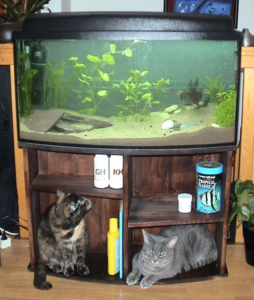 Akvariebord til 122-liter med buet front. | Akvaforum.no - Akvarieforum, akvarium og akvariefisk