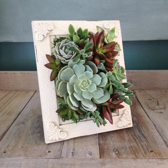 vertical succulent garden planter by verticalflora on etsy