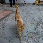 Le capacità del gatto...