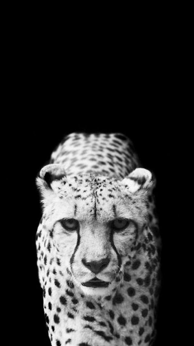 Cool Leopard Dark Animal Wallpaper Iphone 8 Wallpapers Animal