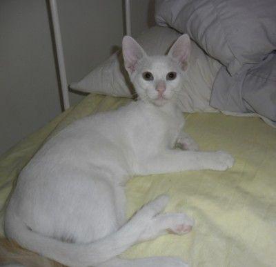 Whito geboren mei 2014 was in een veld gegooid waar honden verbleven die niet katvriendelijk zijn. De opvanger heeft hem eerst met de fles gevoerd en nu eet Whito zelf. Whito is door zijn ervaringen was verlegen naar vreemde mensen. Hij is sociaal naar andere kittens en katten en speelt graag met ze. Omdat Whito een witte kat is weten ze nog niet of hij goed kan horen maar lijkt normaal te reageren op geluiden. Whito is gecastreerd.