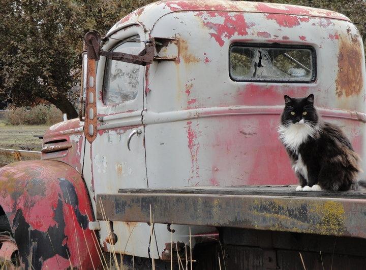 Farm kitty named Hope.