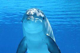 Delfiner, Marina Däggdjur, Vatten