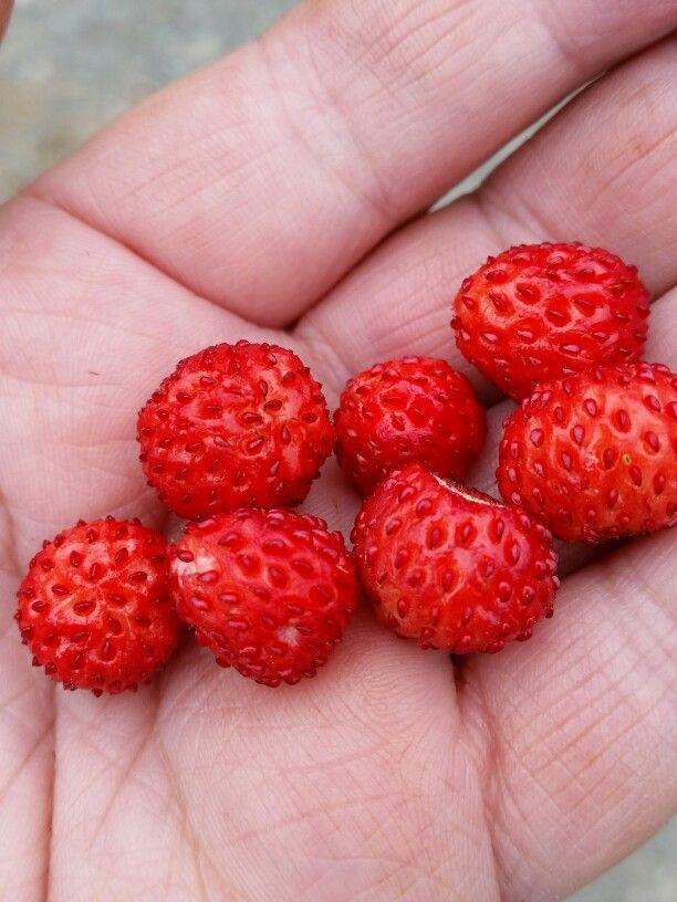 mmmmmarkjordbær ♡