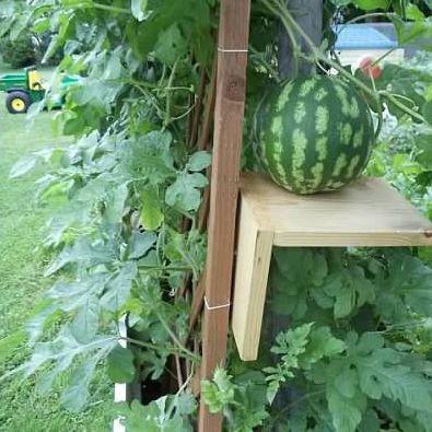 Verticalizando o jardim / horta. Treliça e suporte para melancia.  Fotografia: http://www.hostelgarden.net