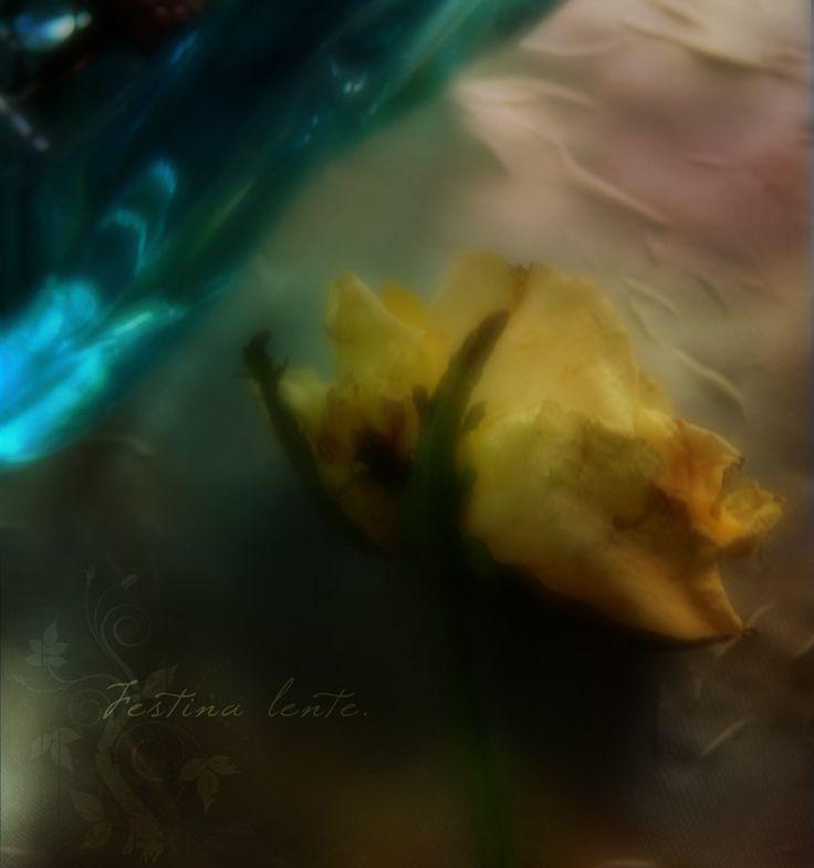 festina lente by aglayan-agac.deviantart.com