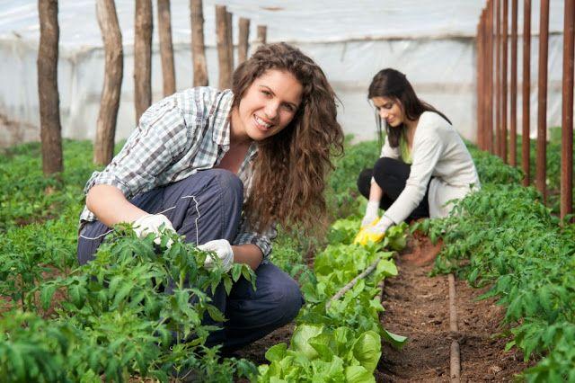 ΓΝΩΜΗ ΚΙΛΚΙΣ ΠΑΙΟΝΙΑΣ: Υποβολή αιτήσεων στήριξης έτους 2016 για νέους γεω...