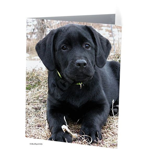 Black Labrador Retriever puppy card  Black lab by BlackDogArtJudy