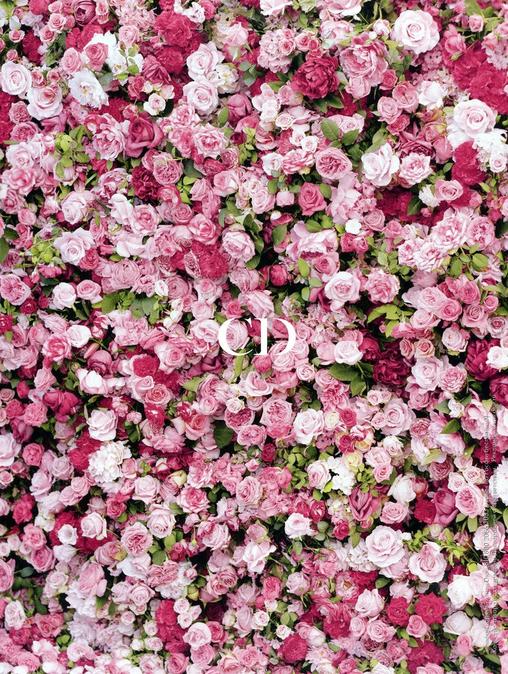 Miss Dior fragrance #roses