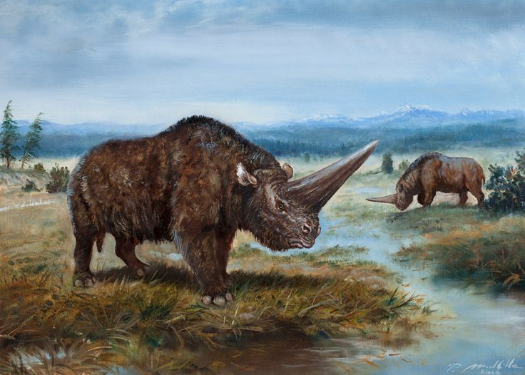 Elasmotherium sibiricum by Petr Modlitba