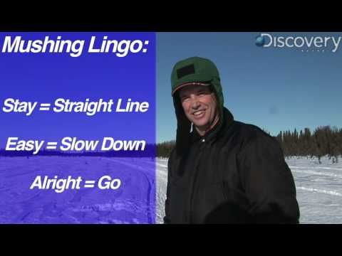 Iditarod: Mushing Lingo