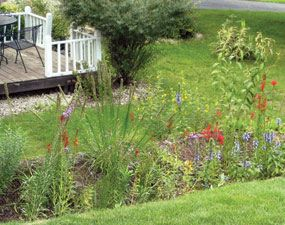 6 Common Lawn Problems and How to Fix Them | The Family Handyman
