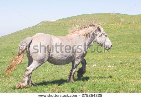 Stallion runs gallop on the Subasio mountain in Umbria. #Horse #Gallop #Stallion #Animals #Farms #Running #Elegance #SubasioMountain #Umbria #Park