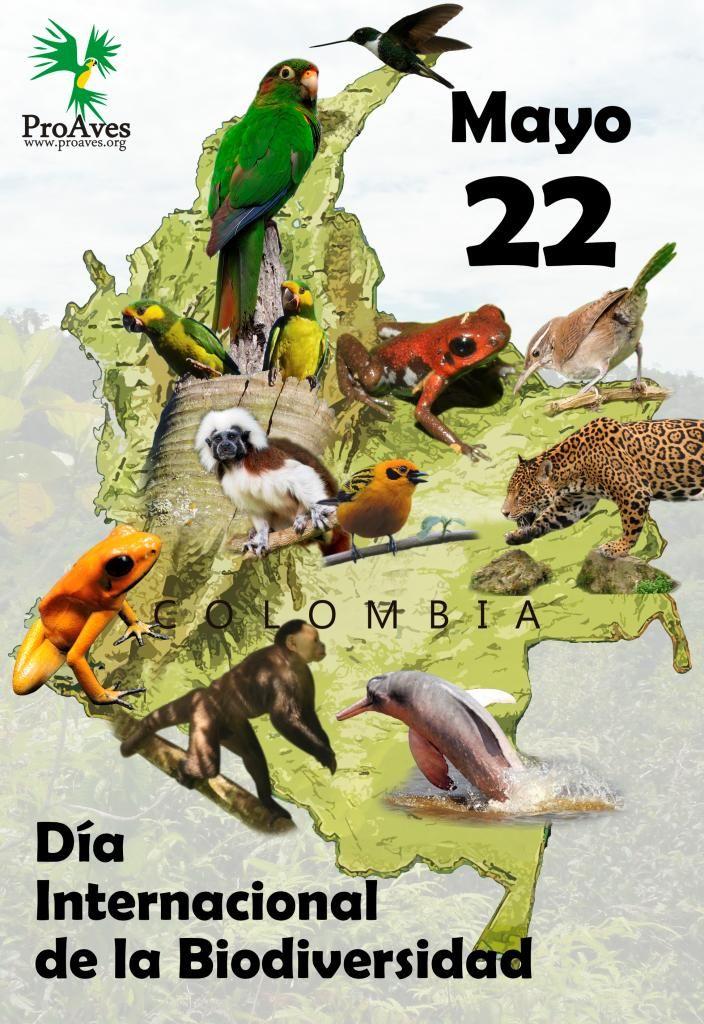 #DiadelaDiversidadBiologica Vincúlate y ayúdanos a conservar la biodiversidad de nuestro país. http://www.proaves.org/vinculate-gratis/…
