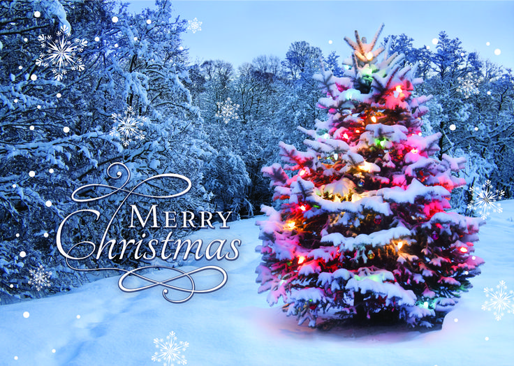 37 best personalized merry christmas cards images on pinterest beacon of joy snowy tree personalized christmas greeting cards httpspartyblockcardwebsite m4hsunfo