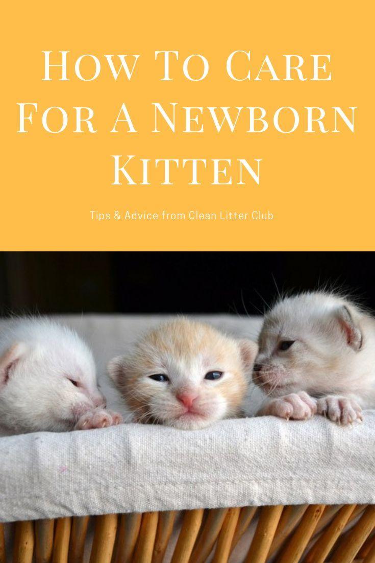 How To Care For A Newborn Kitten Newborn Kittens Taking Care Of Kittens Kitten Care