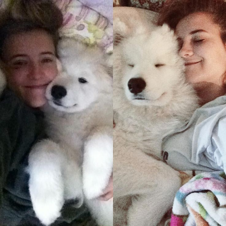 Snuggles then and now @kodathesamoyed