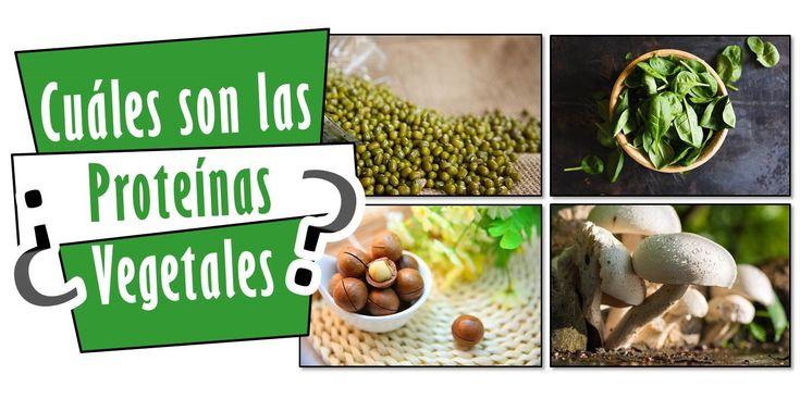 ¿Cuáles son las Proteínas Vegetales? - Lista de Alimentos - Mejor Real que Perfecto
