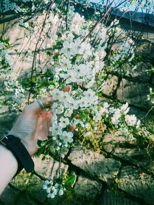 Порция вдохновения: Немного из прошедшей весны)