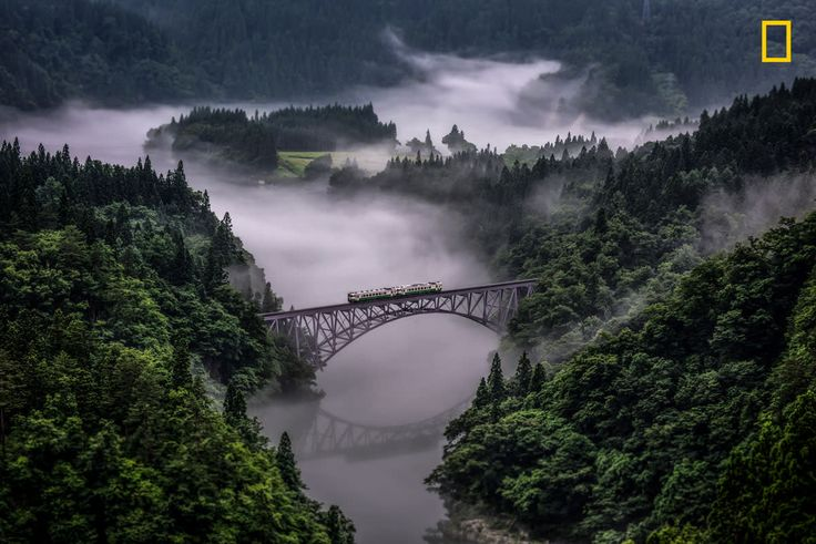 Photo and caption by Teuruo Araya / National Geographic Nature Photographer of the Year Contest
