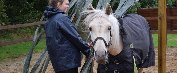 Easy ideas for a horse agility course