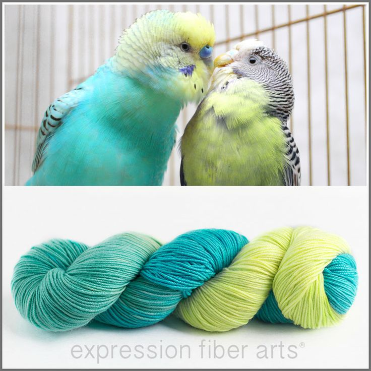 Expression Fiber Arts - PARROT FEATHERS 'RESILIENT' SUPERWASH MERINO SOCK, $24.00 (http://www.expressionfiberarts.com/products/parrot-feathers-resilient-superwash-merino-sock.html)
