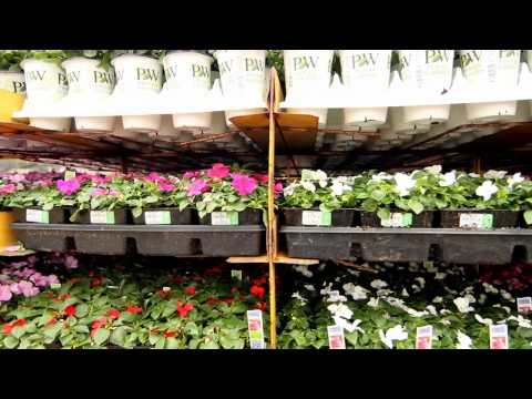 how to choose plants for your garden video