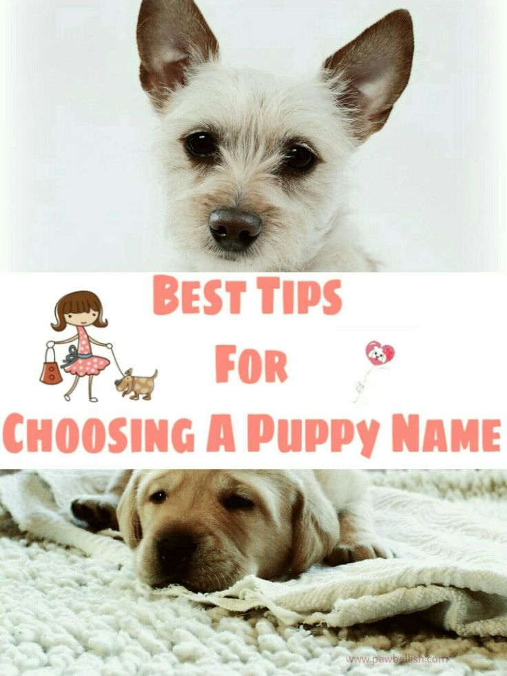 Best 25 Names for puppies ideas on Pinterest  Cute names for