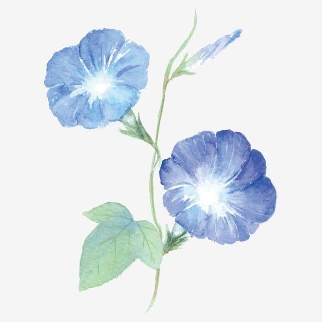 꽃 나팔꽃 만화 자유형 나팔꽃 보라색 밝다 만화 자유형 나팔꽃 Png 및 벡터 에 대한 무료 다운로드 In 2020 Morning Glory Flowers Flower Drawing Flowers