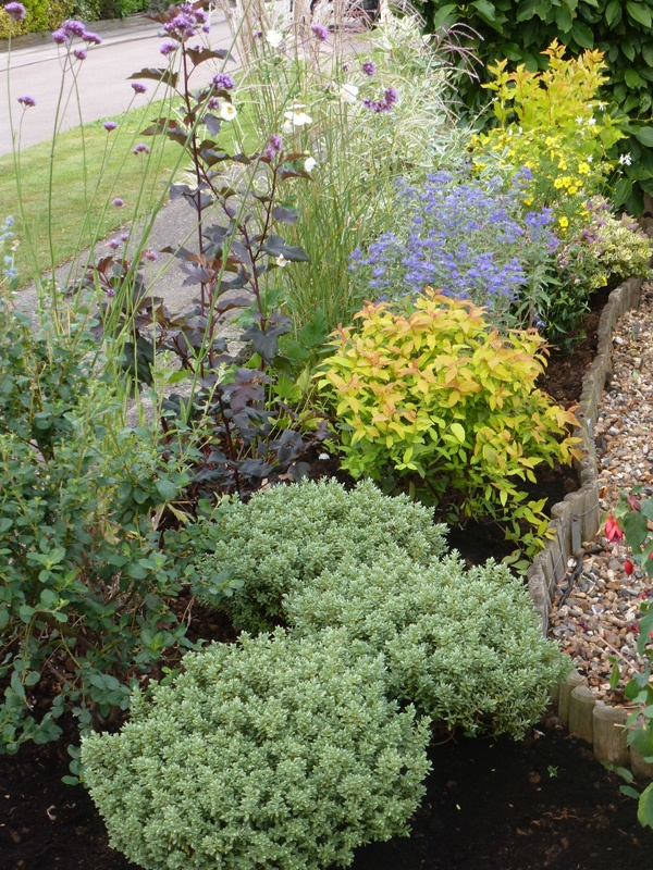 Low maintenance plants for the garden garden ideas for Low maintenance green plants