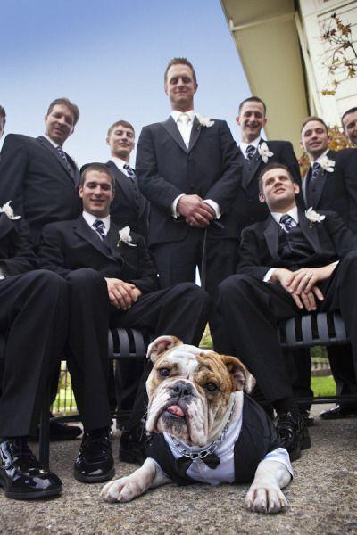 Gibt es in Kürze eine Hochzeit? 10 Traufotos von glücklichen Paaren zusammen mit Ihrem geliebten Hund! - DIY Bastelideen