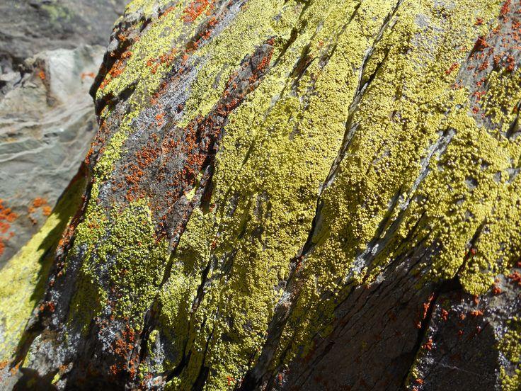 lichen - Lake Moraine, Canada