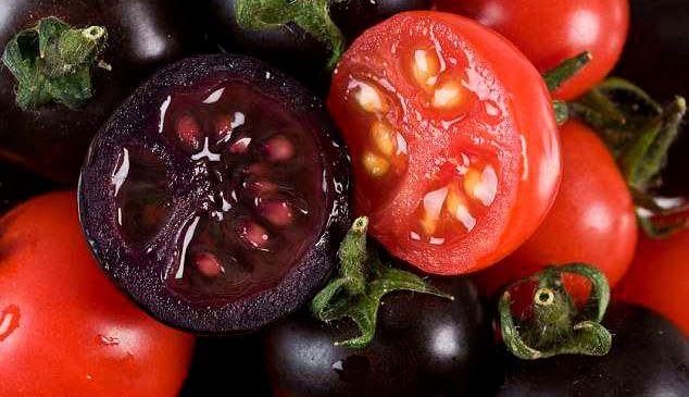 Crean tomates transgénicos morados que ayudan a combatir el cáncer.