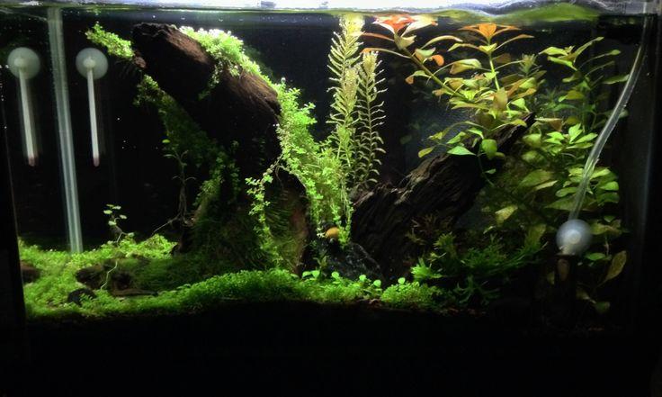 freshwater aquarium freshwater tropical tropical fish aquariums ...