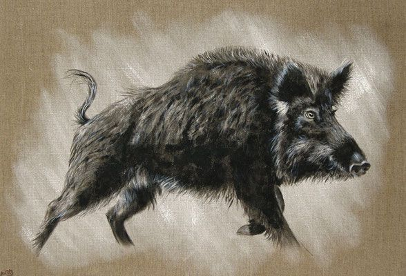 Sanglier Oeil Clair Peintre Animalier Sanglier Animalier
